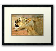 Roarie - the roaring cub Framed Print