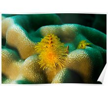 Yellow Christmas tree worm Poster