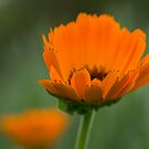 Orange & Green by Karen Havenaar