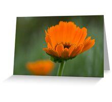 Orange & Green Greeting Card