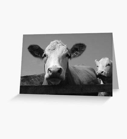 Norfolk Cow Greeting Card