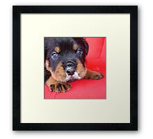 Comical Rottweiler Puppy With Food On Snout Framed Print