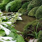 Hosta in a Zen Garden by PB-SecretGarden