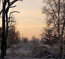 Winterevenings by liesbeth