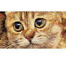 cat eyes Photographic Print