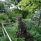 Cat in a Zen Garden #8 - Drôme - France by PB-SecretGarden