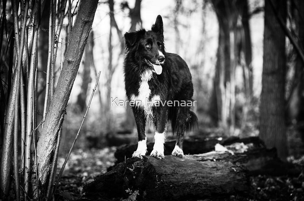 Forest Dog by Karen Havenaar