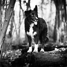 Forest Dog by Karen Havenaar