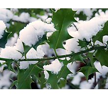 Snow covered holly Photographic Print