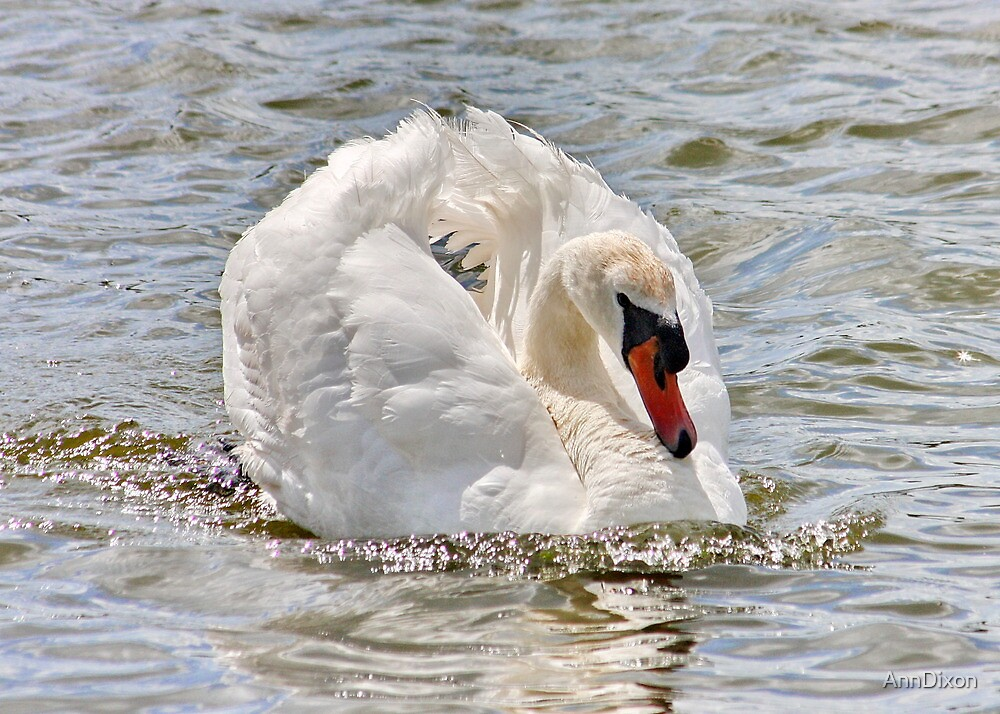 Swan on the River Dee by AnnDixon