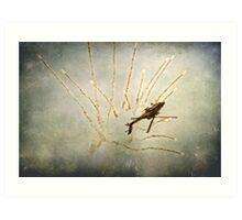 Apache Flares Art Print