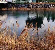 Reflective lake  by Kelvin779