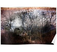 Winter Trees 2 Poster