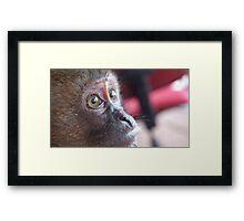 Monkey's Eyes Framed Print
