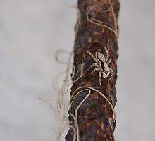 Spider Crawl by Kelvin779