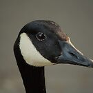 portait of a canada goose by Jicha