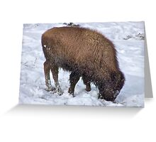 Survival ! Greeting Card