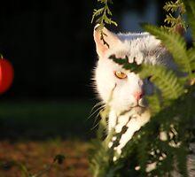 My old pet cat Ida by Rex666