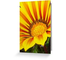 Orange and Rust Color Gazania Montezuma Macro Greeting Card