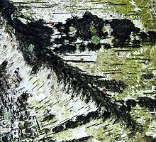 Birch Bark by Barbara Ingersoll