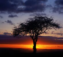 Tree silhouette at sunset by John Dickson