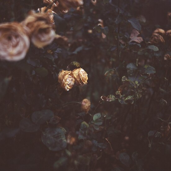The Last of the English Roses by Francesca Wilkins