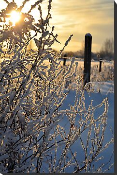 Frosty Morning by Roxanne Persson
