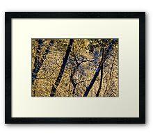 Icy morning near Bear Creek Framed Print