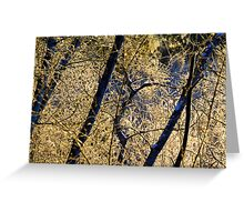 Icy morning near Bear Creek Greeting Card