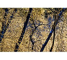 Icy morning near Bear Creek Photographic Print