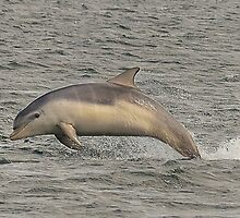 Baby dolphin by MPRimages