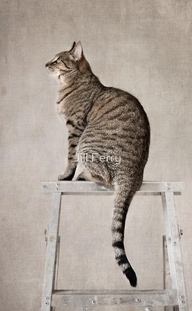 The watcher by Jill Ferry