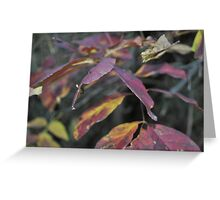 Autumn Focus Greeting Card