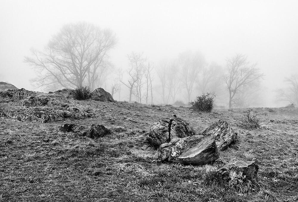 Rocks and fog by alan shapiro