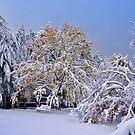 When Seasons Collide by Paul Gitto