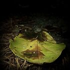 Green Leaf in Fall by alltherowboats