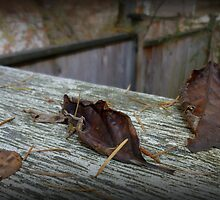 Leaves on a Fence Post 02 by alltherowboats