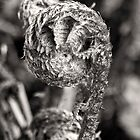 New Zealand Fern Frond b/w by Heike Richter