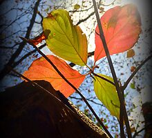 Christmas Coloured Leaves by alltherowboats