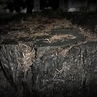 Tree Stump in the Night by alltherowboats
