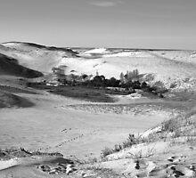 Cape Cod Dunes by BavosiPhotoArt