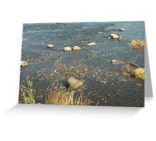Rideau River, Ottawa, ON Greeting Card