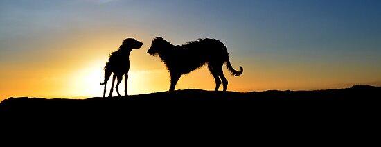 deerhound shillouette by joak
