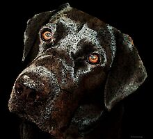 Black Labrador Retriever Dog Art - Dark Chocolate by Sharon Cummings