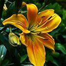 Yellow Daylily by Marty Straub