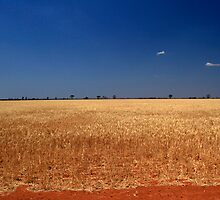 Red Dirt And Golden Grain #3 by Noel Elliot