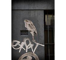 Tawny Photographic Print