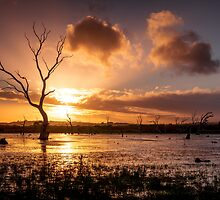 Wetland Sunset by Ryan Carter