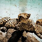Cheetas in the African Serengetti by Amyn Nasser