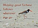 Good Bye Good Luck Greeting Card - American Oystercatcher by MotherNature